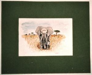 akvarell festés, elefánt